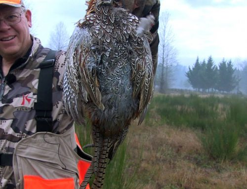 Western Oregon Pheasants