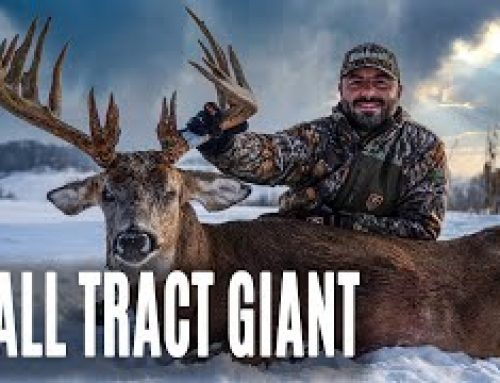 Mike's Small Tract Giant, Intern Tags Public Land Buck | Midwest Whitetail