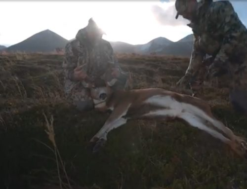 BLADED BLACKTAIL BUCK on KODIAK ISLAND! | PUBLIC LAND | SITKA BLACKTAIL